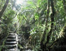 El Biotopo del Quetzal se ubica en el departamento de Baja Verapaz. (Foto, Prensa Libre: Hemeroteca PL).