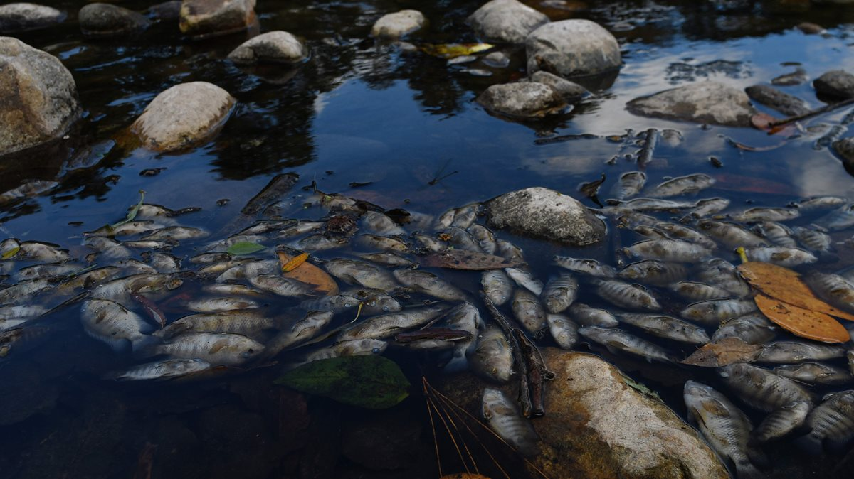 La mortandad de peces en el río Lempa enciende alarmas en Centroamérica