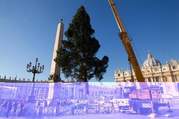 El árbol, que presidirá la Plaza de San Pedro y que ha sido donado por la comunidad alemana Waldmuenchen. (Foto Prensa Libre: EFE)