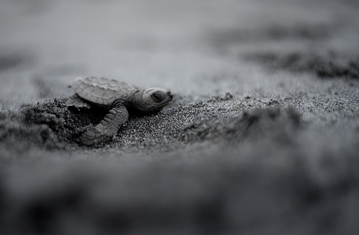 El arriesgado viaje hacia el mar de las tortugas en Filipinas
