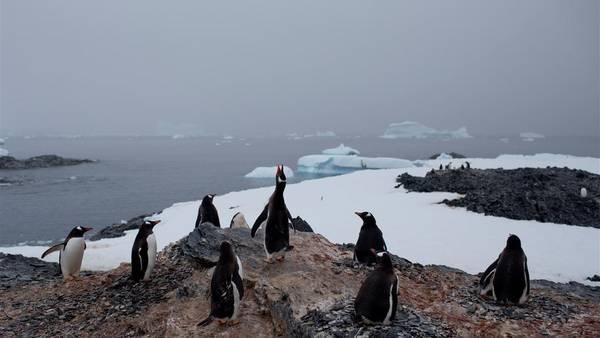 Pinguinos amenazados por un iceberg. (Foto Prensa Libre: AFP)