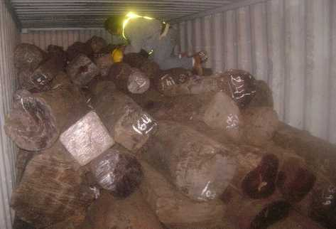 En el puerto Santo Tomás de Castilla hay tres contenedores incautados con trozas de rosul, las cuales se trató de sacar con papelería falsa, en la cual se consignaba otro tipo de madera.
