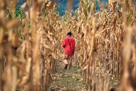 El Corredor Seco es una de los ejemplos mundiales del cambio climático. (Foto, Prensa Libre: Hemeroteca PL)