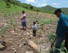 El plan abarcará todo el país para prevenir el hambre durante esta época en la que escasea el alimento para familias pobres. (Foto Prensa Libre: Hemeroteca PL)