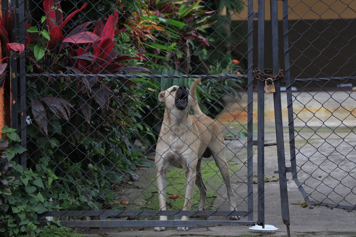 Mascotas cuidan casas de familias evacuadas en El Rodeo pues propietarios temen saqueos