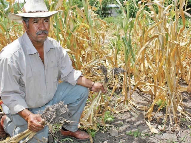 Canícula podría afectar otra vez el corredor seco en julio