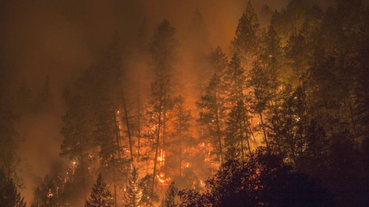 Los bomberos tardaron una semana en extinguir los incendios en Arizona. (Foto: Hemeroteca PL)