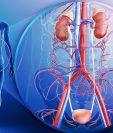 Los riñones mantienen al cuerpo libre de toxinas por medio de la orina y regulan la presión arterial. (Foto Prensa Libre: Hemeroteca PL)