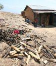 Las familias afectadas por el hambre estacional son 354 mil familias campesinas, cuyas reservas de alimentos se han acabado. (Foto Prensas Libre: Hemeroteca PL)