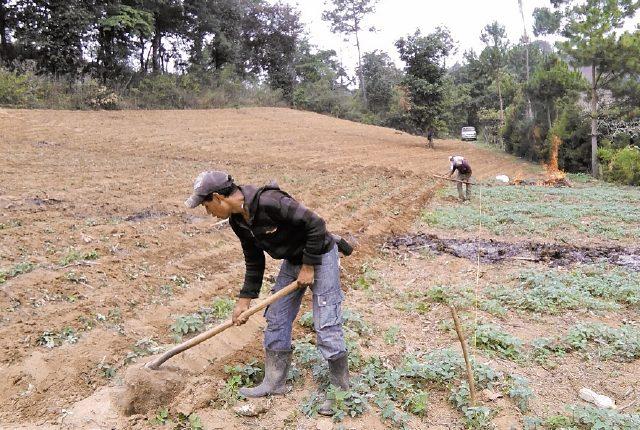 El trabajo agrícola abarca al 36.9% de la población, la cual es parte del sector informal.