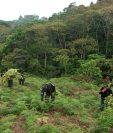 Policías y militares destruyen las extensas plantaciones de coca descubiertas en Honduras. (Foto Prensa Libre: AFP)