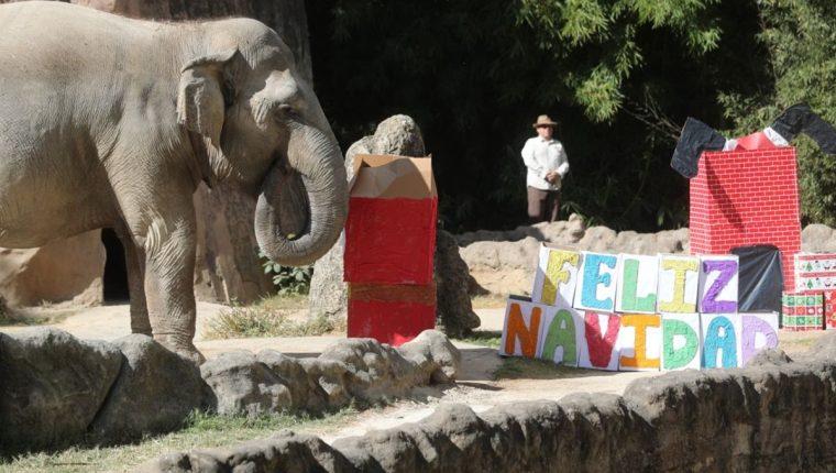 Visitantes del Zoológico La Aurora se sorprendieron al ver que los animales recibieron regalos de Navidad. (Foto Prensa Libre: Erick Ávila)