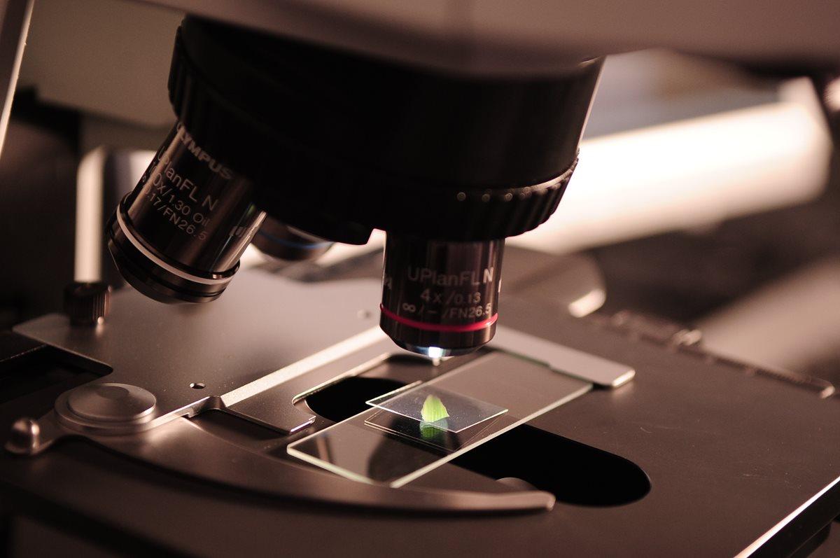 Los científicos esperan que lo ocurrido con los demonios de Tasmania permita analizar mejor el comportamiento genético que propicia la regresión de un tumor (Foto Prensa Libre: servicios / pexels).