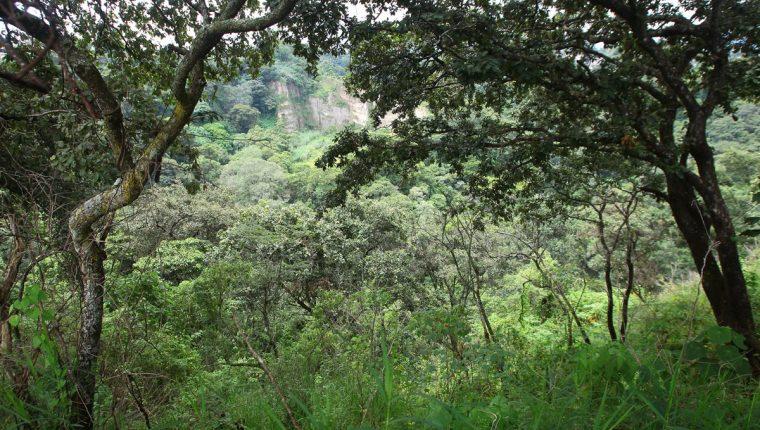 Las Guacamayas es un área de restauración ecológica ubicada en Mixco. En el 2016 fueron plantados más de dos mil árboles de ciprés y pino en el lugar. (Foto Prensa Libre: Álvaro Interiano)