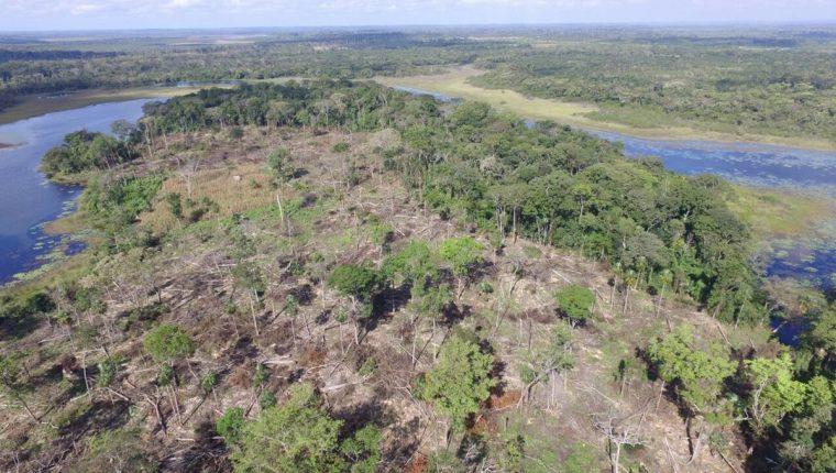 Personal de Beos, guardabosques del Conap y del Cecón localizaron en el Biotopo Laguna del Tigre 14 manzanas de montaña talada. (Foto Prensa Libre: Rigoberto Escobar)