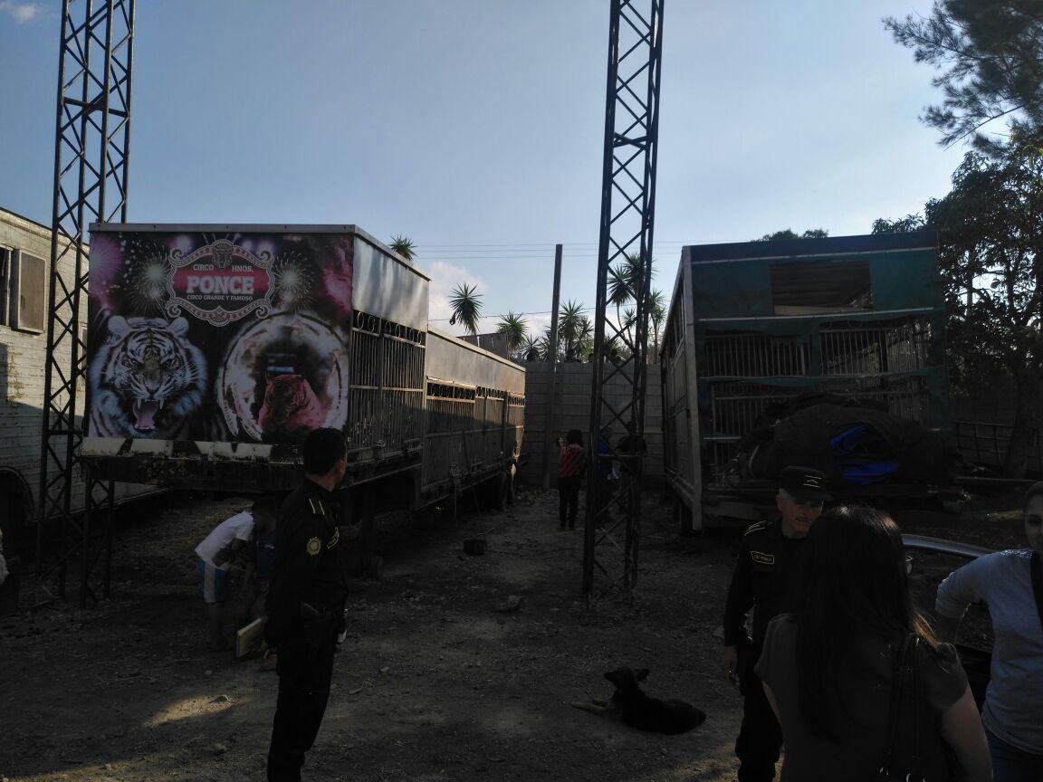 Los animales están en un terreno que alquilaron propietarios del circo, en Villa Canales. (Foto Prensa Libre: Cortesía Conap)