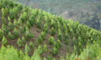 Una iniciativa lanzada en Youtube pretende plantar 20 millones de árboles en todo el planeta. (Foto Prensa Libre: Hemeroteca)