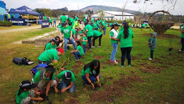 Docientos árboles fueron sembrados en el parque Érick Barrondo.(Foto Prensa Libre: José Patzán)
