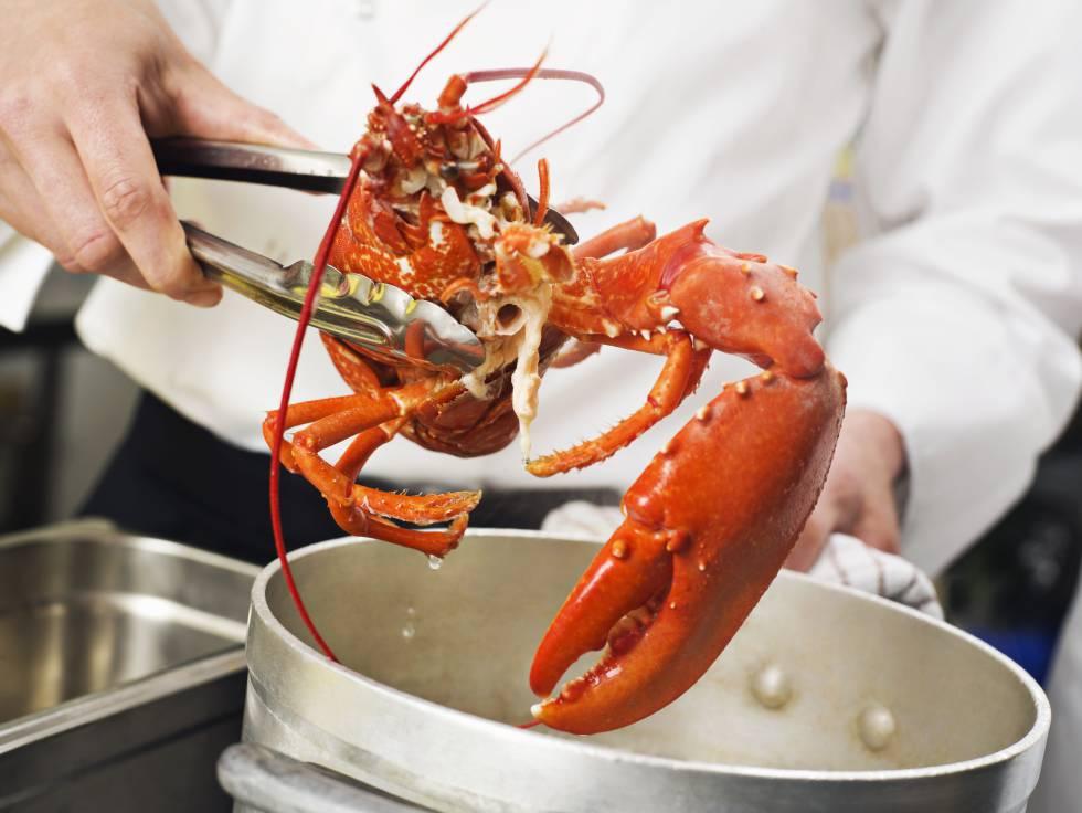 ¿Deben los chefs modificar su forma de cocinar langostas? En Suiza dicen que sí (Foto Prensa Libre: El Pais / Getty).