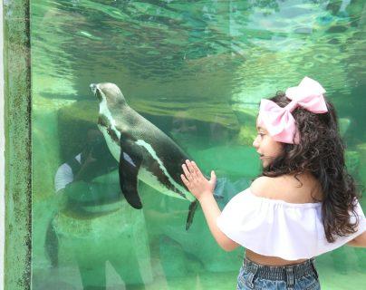 Una niña disfruta al observar los pingüinos en el Zoológico La Aurora. (Foto Prensa Libre: Óscar Felipe Q.)