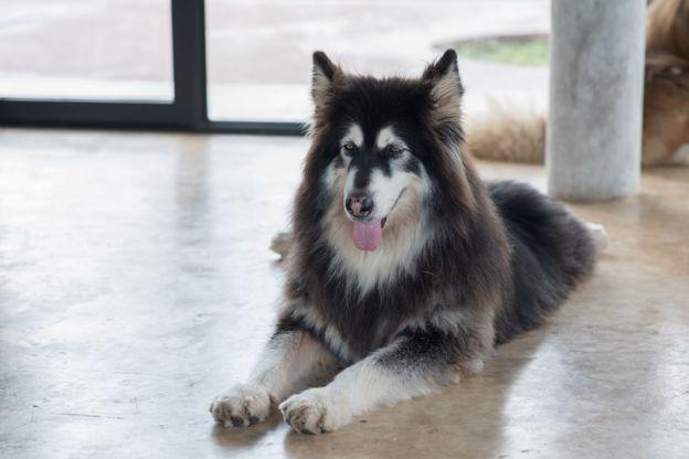Los perros entrenados pueden ir a las oficinas de Google. (GETTY IMAGES)