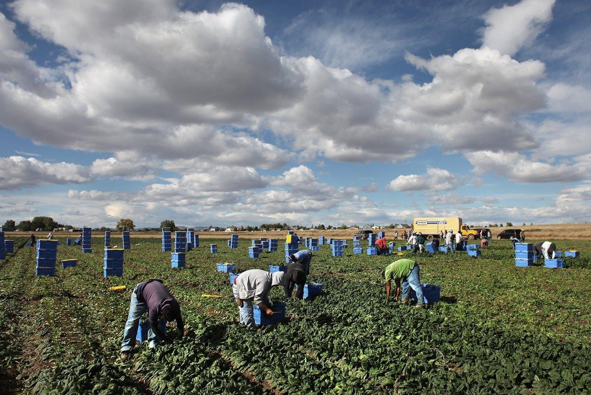 A pesar de las medidas drásticas de EE. UU. para detener la migración, miles de guatemaltecos insisten en viajar en busca de un mejor futuro. (Foto: Hemeroteca PL)