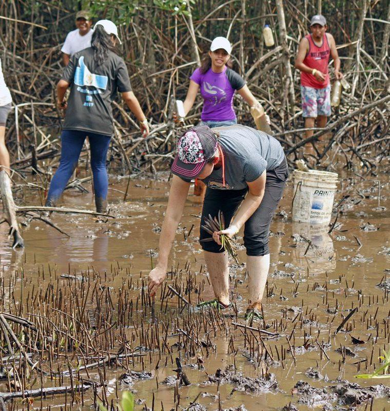 Jornada de plantación de mangle, en Las Lisas, Chiquimulilla, Santa Rosa. (Foto Prensa Libre: Cortesía Marvin Grijalva)