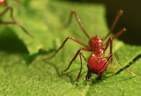 eXPERTOS ANALIZAN la actividad de los bichos.