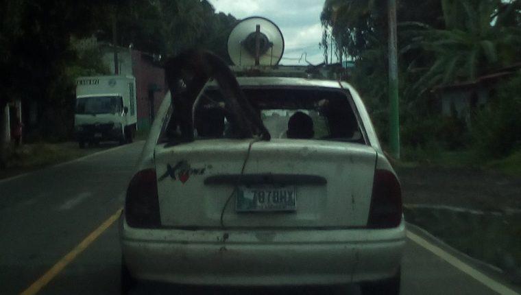 Ocupantes de un automóvil trasladan a un mono, aparentemente para promocionar funciones de un circo, en Patulul. (Foto Prensa Libre: Cortesía)