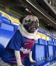 Esta es la mascota que está causando sensación en los aficionados del Barcelona. (Foto Instagram)