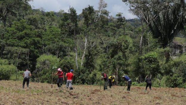 Los exrebeldes han estado trabajando la tierra como parte de sus nuevas tareas tras la desmovilización.