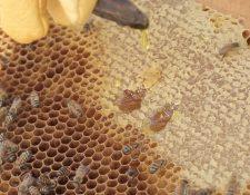 El incremento en la demanda se debe a la calidad, sabor y propiedades nutritivas de la miel. (Foto Prensa Libre: Álvaro González)
