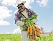 Productores agrícolas están listos para la siembra. (Foto Prensa Libre: Hemeroteca PL)