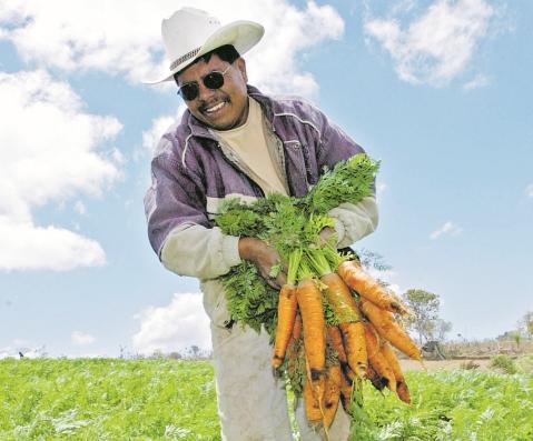 Productores agrícolas están listos para la siembra