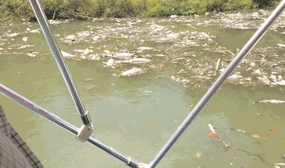 Contaminación en río La Pasión sigue impune