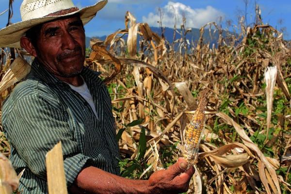 El Maga licita la compra de granos básicos para asistencia alimentaria. (Foto Prensa Libre: Hemeroteca PL)