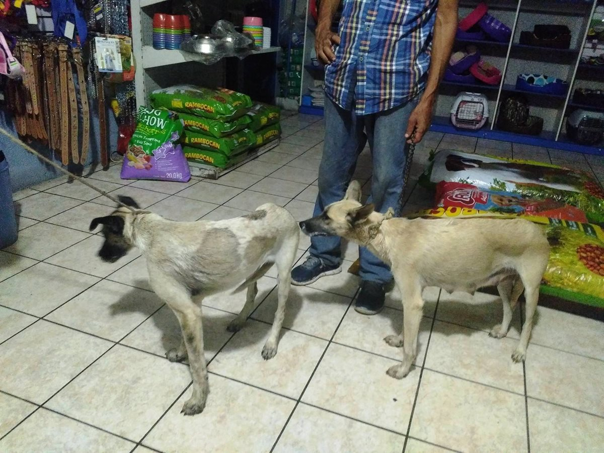 Dos perros que aún fueron encontrados con vida fueron llevados a una veterinaria. (Foto Prensa Libre: Mario Morales)