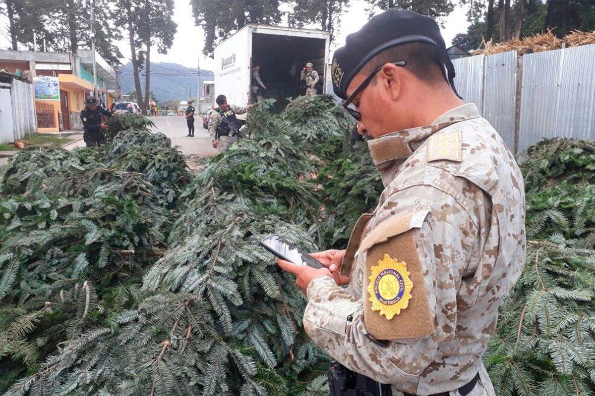 Agentes de la PNC resguardan las ramillas de pinabete decomisadas en San Andrés Chapil, San Pedro Sacatepéquez, San Marcos. (Foto Prensa Libre: Whitmer Barrera)
