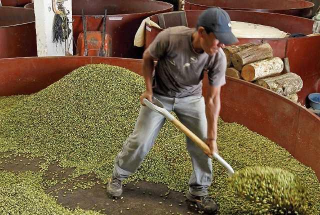 El cardamomo lideró las exportaciones en enero atribuido a mejores precios en el mercado internacional. (Foto Prensa Libre: Hemeroteca)