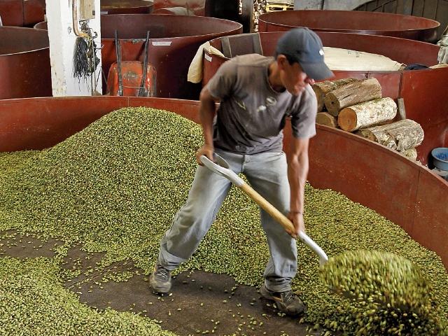 Las exportaciones de cardamomo aumentaron en enero pasado, según las estadísticas de comercio exterior. (Foto Prensa Libre: Hemeroteca)