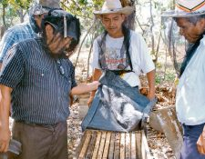 Apicultores de Coatepeque muestran la masiva mortandad de abejas en esa región costera. (Foto, Prensa Libre: Edgar Octavio Girón)