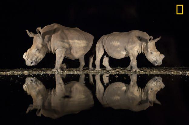 A estos rinocerontes les quitaron los cuernos para disuadir a los cazadores furtivos. ALISON LANGEVAD/2018 NAT. GEO. PHOTO CONTEST