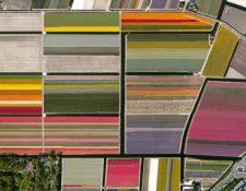 LOS COLORES HOLANDESES - Estas coloridas franjas son parte de una zona de cultivo de tulipanes en Lisse, una ciudad al oeste de Holanda. DAILY OVERVIEW/DIGITALGLOBE, COMPAÑÍA MAXAR