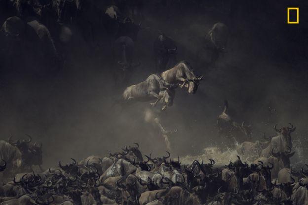 Esta foto de Pim Volkers fue tomada en el río Mara, en Tanzania. PIM VOLKERS/2018 NATIONAL GEOGRAPHIC PHOTO CONTEST