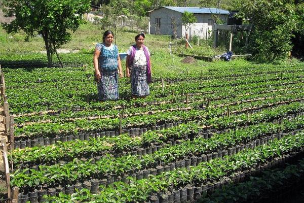Mujeres integrantes de la Cooperativa Integral Agrícola El Porvenir  muestran almácigos de café. (Foto Prensa Libre: Mike Castillo)