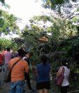 Paso en ruta a suroccidente permanece bloqueado por árbol, en Colomba, Quetzaltenango. (Foto Prensa Libre: Alexánder Coyoy)