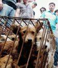 Varios perros son ofrecidos en las calles de Yulin, China. Los canes son comprados para comersu carne en una tradición durante el solsticio de verano y días posteriores. (Foto Prensa Libre: AP).