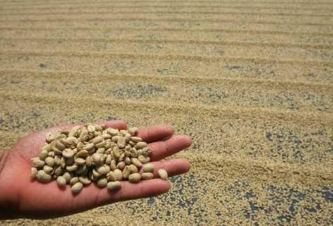 El café es una fuente de divisas en el país.