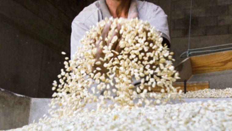 Maga refiere  que no habrá escasez de maíz.