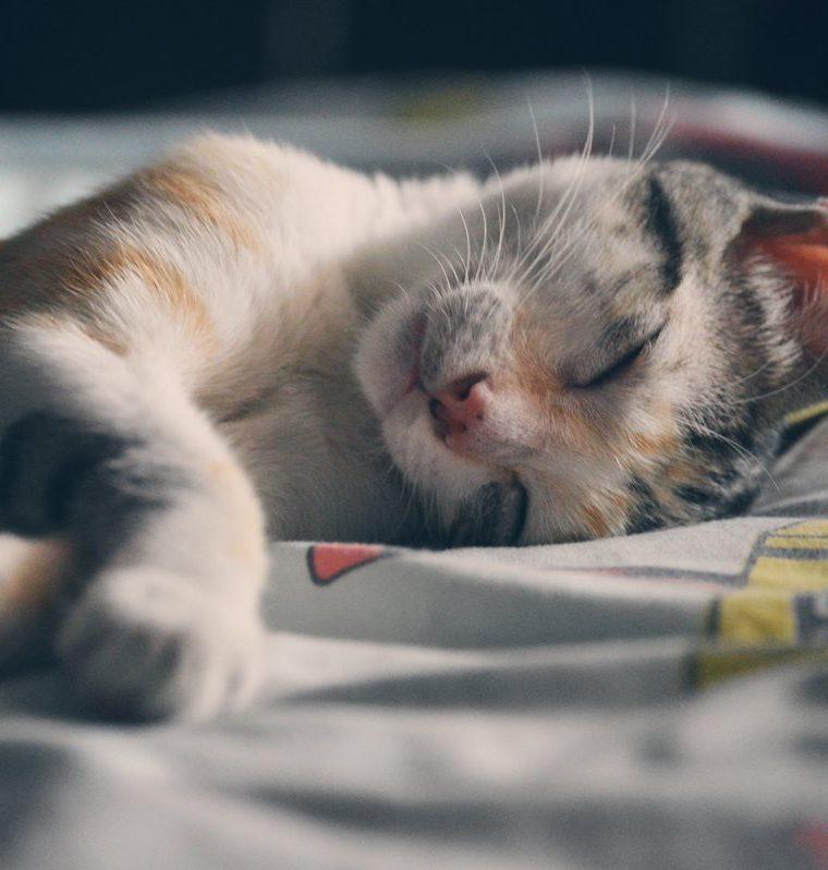Los gatos y perros son algunos de los animales que buscan ayuda (Foto Prensa Libre: Pexels).